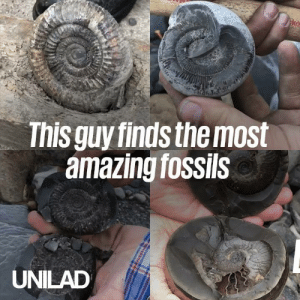 Fossil hunters can spend hours trying to find the right stone, but when they do the results are just stunning 😲😍: ko  This guy finds the most  amazing fossils  UNILAD Fossil hunters can spend hours trying to find the right stone, but when they do the results are just stunning 😲😍