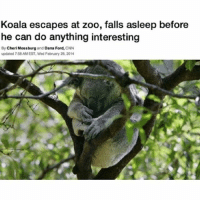 Fall, Netflix, and Work: Koala escapes at zoo, falls asleep before  he can do anything interesting  By Cheri Mossburg and Dana Ford,  CNN  updated 758AMEST Wed February 26.2014 100% me as a koala like let's be real if I wasn't at work rn I wouldn't be doing anything more exciting than starting a new series on Netflix and falling asleep the first episode in