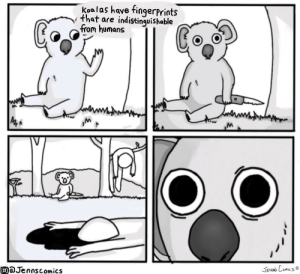 Koala Fingerprints [OC]: Koalas have fingerprints  that are indistinquishable  trom humans  aJennscomics  JeNNS Comes Koala Fingerprints [OC]