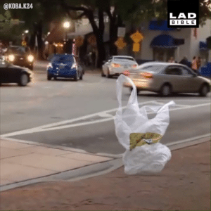 Dank, Bible, and A Plastic Bag: @KOBA.K24  LAD  BIBLE Do you ever feel like a plastic bag, drifting through the wind, wanting to start again? 😂💨