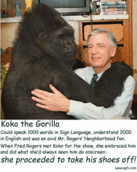 <p>These two are almost too wholesome to take.</p>: Koko the Gorilla  Could speak 1000 words in Sign Language, understand 2000  in English and was an avid Mr. Rogers' Neighborhood fan.  When Fred Rogers met Koko for the show, she embraced him  and did what she'd always seen him do onscreen  she proceeded to take his shoes off!  wwwvegtv.com <p>These two are almost too wholesome to take.</p>
