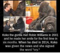 """😢😢😢😢 follow my main @x__antisocial_butterfly__x: Koko the gorilla met Robin Williams in 2001  and he made her smile for the first time in  six months. When he died in 2014, Koko  was given the news and she signed  the word """"cry."""" 😢😢😢😢 follow my main @x__antisocial_butterfly__x"""