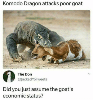 Be Like, Dank, and Memes: Komodo Dragon attacks poor goat  The Don  @JackedYoTweets  Did you just assume the goat's  economic status? It do be like that by DiligentCreme MORE MEMES