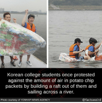 College, News, and Potato: Korean college students once protested  against the amount of air in potato chip  packets by building a raft out of them and  sailing across a river.  Photo courtesy of YONHAP NEWS AGENCY  @factsweird