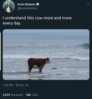 Day 1: Kovie Biakolo  @koviebiakolo  I understand this cow more and more  every day  1:26 PM 30 Oct 18  4,675 Retweets 16K Likes