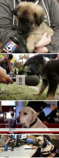 """Dogs, News, and Bbc News: KPCC   BOUNCE  Dog  BBC NEWS everything is terrible so i googled """"dogs being interviewed"""" and it helped https://t.co/Gb3Sfl6ZxZ"""