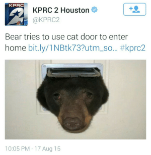 Bear, Home, and Houston: KPRC  KPRC 2 Houston  @KPRC2  1  Bear tries to use cat door to enter  home bit.ly/1 N Btk73?utm-so.. #kprc2  10:05 PM 17 Aug 15