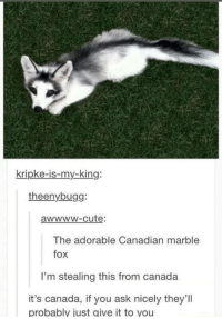 my king: kripke-is-my-king:  theenybugg:  awwwW-cute:  The adorable Canadian marble  fox  fox  I'm stealing this from canada  it's canada, if you ask nicely they'll  probably just give it to you