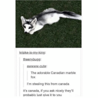 Hi Canada, can i please have 10: kripke-is-my-king:  theenybugg:  awwww-cute:  The adorable Canadian marble  fox  I'm stealing this from canada  it's Canada, if you ask nicely they'll  probably just give it to you Hi Canada, can i please have 10