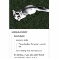 I'm placing orders, how many y'all need?: kripke-is-my-king:  theenybugg:  awwww-cute:  The adorable Canadian marble  fox  I'm stealing this from canada  it's canada, if you ask nicely they'll  probably iust qive it to vou I'm placing orders, how many y'all need?
