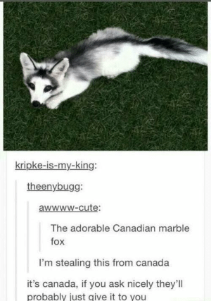 I want one: kripke-is-my-king:  theenybugg:  awwwW-cute:  The adorable Canadian marble  fox  I'm stealing this from canada  it's canada, if you ask nicely they'll  probably just give it to you I want one