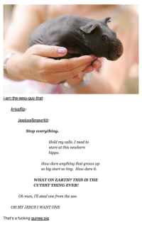 Hippoe: krisaflip:  iessicaellenparkit  Stop everything  Hold my calls. I need to  stare at this newborn  hippo.  How dare anything that grows up  so big start so tiny. How dare it.  WHATON EARTH? THIS IS THE  CUTEST THING EVER!  Oh man, I'll steal one from the zoo.  OH MY JESUS I WANT ONE  That's a fucking guinea pig