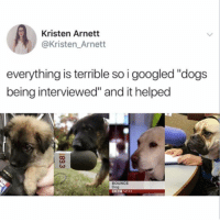 "Dogs, Memes, and News: Kristen Arnett  @Kristen_Arnett  everything is terrible so i googled ""dogs  being interviewed"" and it helped  BOUNCE  Dog  B0C NEWS tag someone who needs this 💖 (@kristen_arnett on Twitter)"