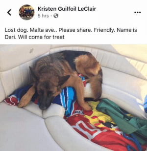 Memes, Lost, and Word: Kristen Guilfoil LeClair  <  5 hrs  Lost dog. Malta ave.. Please share. Friendly. Name is  Dari. Will come for treat Lost dog Ballston Spa/Malta....Malta ave  Please spread the word.  She's still lost. The owners have been looking for her with no luck. Kristen is the owner and her number is 518-339-6057