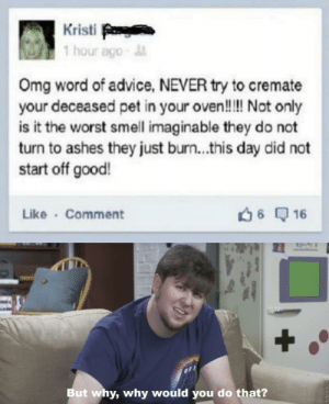 Good ol Facebook: Kristi  1 hour ago-  Omg word of advice, NEVER try to cremate  your deceased pet in your oven!!! Not only  is it the worst smell imaginable they do not  turn to ashes they just burn...this day did not  start off good!  Like Comment  6 16  +  But why, why would you do that? Good ol Facebook