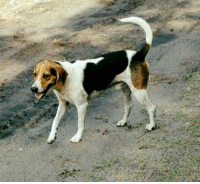 Kristina McLamb posted a FOUND HOUND DOG to Lost and found Pets of WILMINGTON, NC  Found dog off Murryville Rd near dead end Patty Hollifield: Kristina McLamb posted a FOUND HOUND DOG to Lost and found Pets of WILMINGTON, NC  Found dog off Murryville Rd near dead end Patty Hollifield