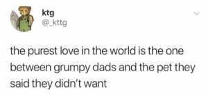 Love, Memes, and World: ktg  @kttg  the purest love in the world is the one  between grumpy dads and the pet they  said they didn't want https://t.co/bg0ytDKHeR