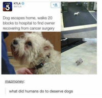 awesomacious:  mans bestest friend: KTLA  KTLA  KTLA  Dog escapes home, walks 20  blocks to hospital to find owner  recovering from cancer surgery  mazmoney:  what did humans do to deserve dogs awesomacious:  mans bestest friend