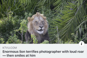 https://t.co/BM8W5vt5VO: KTVU.COM  Enormous lion terrifies photographer with loud roar  - then smiles at him https://t.co/BM8W5vt5VO