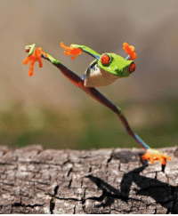 Funny, Kungfu, and Fued: Kung Fu Frog
