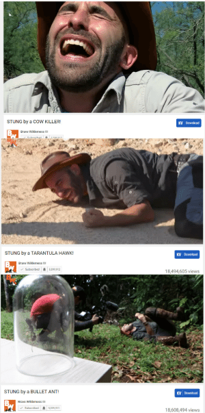 naamahdarling:  havanapitbull:theres this guy on youtube who just gets stung by increasingly deadly/painful insects and the videos are like 5 minutes of him getting psyched up to sting himself and then 10 minutes of him lying on the ground shrieking in agony  His name is Coyote Petersen and he is like what if your nerdy cub scouts leader made a youtube channel where he does nothing but have himself get bitten by gators and stung by insects for views in the hopes it will make people like him.I like him a lot.: KV Download  STUNG by a CoW KILLER!  BN  Brave Wilderness  5399 013  Subecribed   STUNG by a TARANTULA HAWK!  KV Download  Brave Wilderness  Subscribed  5,399,912  18,494,605 views   STUNG by a BULLET ANT!  KV Download  Brave Wilderness  Subscribed  5,399,911  18,608,494 views naamahdarling:  havanapitbull:theres this guy on youtube who just gets stung by increasingly deadly/painful insects and the videos are like 5 minutes of him getting psyched up to sting himself and then 10 minutes of him lying on the ground shrieking in agony  His name is Coyote Petersen and he is like what if your nerdy cub scouts leader made a youtube channel where he does nothing but have himself get bitten by gators and stung by insects for views in the hopes it will make people like him.I like him a lot.