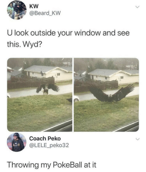 Gotta catch em all by muurvuur2 MORE MEMES: KW  @Beard_KW  U look outside your window and see  this. Wyd?  Coach Peko  @LELE_peko32  Throwing my PokeBall at it Gotta catch em all by muurvuur2 MORE MEMES