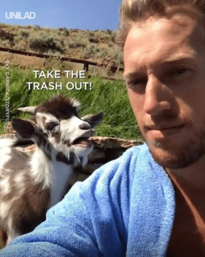 Dank, Goat, and Never: KYGARNICK/STORYFU Don't have an argument with a goat, you'll never win... 😂🐐