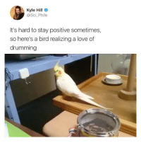This > Anything else. (@sci_phile, @superdeluxe): Kyle Hill  @Sci_Phile  It's hard to stay positive sometimes,  so here's a bird realizing a love of  drumming This > Anything else. (@sci_phile, @superdeluxe)