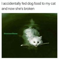 Food, Memes, and Good: l accidentally fed dog food to my cat  and now she's broken  @memesvilleusa who's a good boy? (rp @memesvilleusa 👈👈👈)