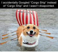 "General humor for living tumors: l accidentally Googled ""Corgo Ship"" instead  of ""Cargo Ship"" and I wasn't disapointed.  32 General humor for living tumors"