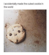 cookie: l accidentally made the cutest cookie in  the world