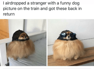 Funny, Tumblr, and Blog: l airdropped a stranger with a funny dog  picture on the train and got these back in  return awesomacious:  Having this happen made my day.☀️