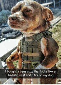 Beer, Memes, and 🤖: l bought a beer cozy that looks like a  ballistic vest and it fits on my dog RT @memetribute: https://t.co/7lT0vnGru2
