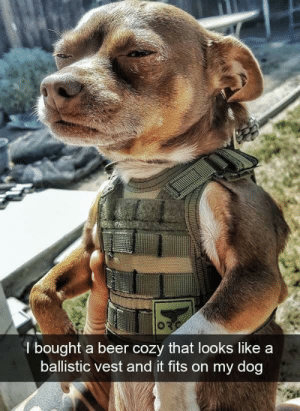 Beer, Funny, and Thank You: l bought a beer cozy that looks like a  ballistic vest and it fits on my dog Thank you for your service. via /r/funny https://ift.tt/2HC7MtU
