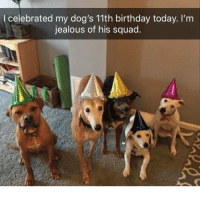 Little guy on the far right made me lol | @cuteandfuzzybunch: l celebrated my dog's 11th birthday today. I'm  jealous of his squad Little guy on the far right made me lol | @cuteandfuzzybunch