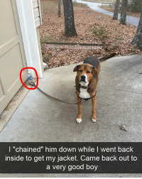 "Funny, Lazy, and Good: l ""chained"" him down while I went back  inside to get my jacket. Came back out to  a very good boy When you're lazy and it actually pays off"