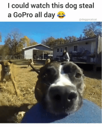 Memes, GoPro, and Watch: l could watch this dog steal  a GoPro all day  @doggocatcat 😂 @doggocatcat