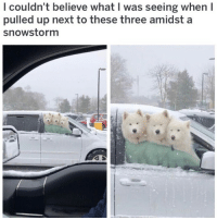(@dogsbeingbasic) is my favorite pupper account on IG! (Pic: reddit u-kingk7): l couldn't believe what I was seeing when I  pulled up next to these three amidst a  snowstorm (@dogsbeingbasic) is my favorite pupper account on IG! (Pic: reddit u-kingk7)