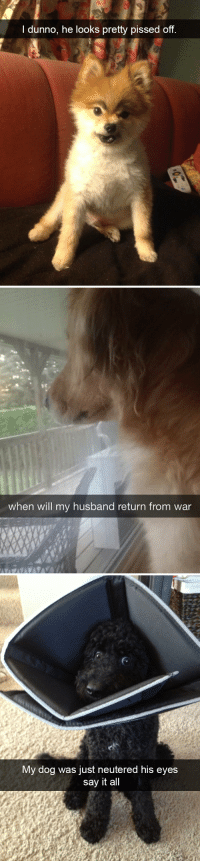 animalsnaps:Dog snaps: l dunno, he looks pretty pissed off   when will my husband return from war   My dog was just neutered his eyes  say it all animalsnaps:Dog snaps