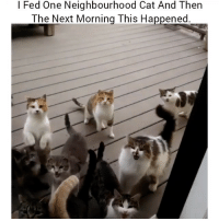 😅😂😂 👉Tag a friend who does this 👉Follow (@soflo) for more laughs: l Fed One Neighbourhood Cat And Then  The Next Morning This Happened 😅😂😂 👉Tag a friend who does this 👉Follow (@soflo) for more laughs