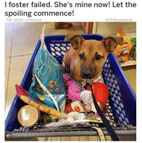 "Bless Up, Bones, and Chill: l foster failed. She's mine now! Let the  spoiling commence!  Pic: reddit u/mocosa  @DrSmashlove  Not recomme ed I'm this puppy because life could be full of uncertainty and pain one minute and then just like that, God creates an opening. It's happened to me countless times and that's why I'm always on here talking this wild sh!t but also being spiritual. Like Vampire Weekends said bruv, I feel it in my bones. U are truly connected to God when not only are u thankful for the blessings, but you're also thankful for the tests because they make u reflect. I just read ""Principles"" by Ray Dalio and he mentioned that instead of medicating life's pain, experience it. Reflect on it. That's how u are able to try to change it and not let it repeat. I'm still gon occasionally hit that kush when I need to chill however Imma reflect on this, thank u Ray 🤗😂. As always this caption was all over the map but I woke up feeling a lot of things and wanted to share. Happy Friday to all of u, bless up! 🙌❤️"