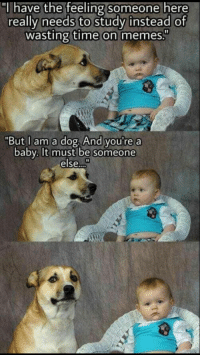 "Memes, Time, and Baby: ""l have the feeling someone here  really needs to studv instead of  wasting time on memes.""  ""But I am a dog, And you're a  baby.Ilt must be someone  else..."