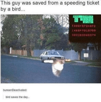 Memes, Tumblr, and 🤖: l his guy was saved from a speeding ticket  by a bird.  E 000 072 07 2  14400910709  003282060074  bunsenDeactivated:  bird saves the day.. Tumblr post!!