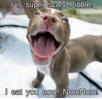 Memes, Text, and 🤖: l is super scary Pibble!  I eat you  now! Norm Norm! Beware! :))  Must Like Our page For more => Text from Dog