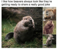 Good, Jokes, and How: l like how beavers always look like they're  getting ready to share a really good joke