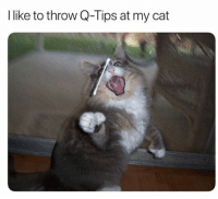 Fresh, Memes, and Animal: l like to throw Q-Tips at my cat 42 Fresh Animal Memes Dump of the Day