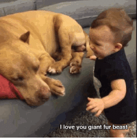 Dogs, Love, and Giant: l love vou giant fur beast Love you too little hooman