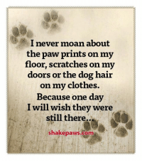 Clothes, Dogs, and Memes: l never moan about  the paw prints on my  floor, scratches on my  doors or the dog hair  on my clothes.  Because one day  I will wish they were  still there.  shakepaws.coma I always appreciate my dogs