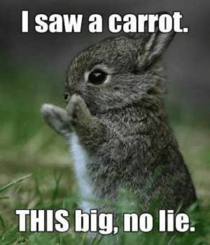 Easter, Funny, and Memes: l saw a carrot.  THIS big, no lie. Funny Easter Memes 019