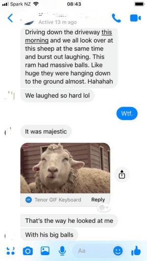 me irl: l Spark NZ  08:43  Active 13 m ago  Driving down the driveway this  morning and we all look over at  this sheep at the same time  and burst out laughing. This  ram had massive balls. Like  huge they were hanging down  to the ground almost. Hahahah  We laughed so hard lol  Wtf  It was majestic  F Tenor GIF Keyboard  Reply  1  That's the way he looked at me  With his big balls  Aa me irl